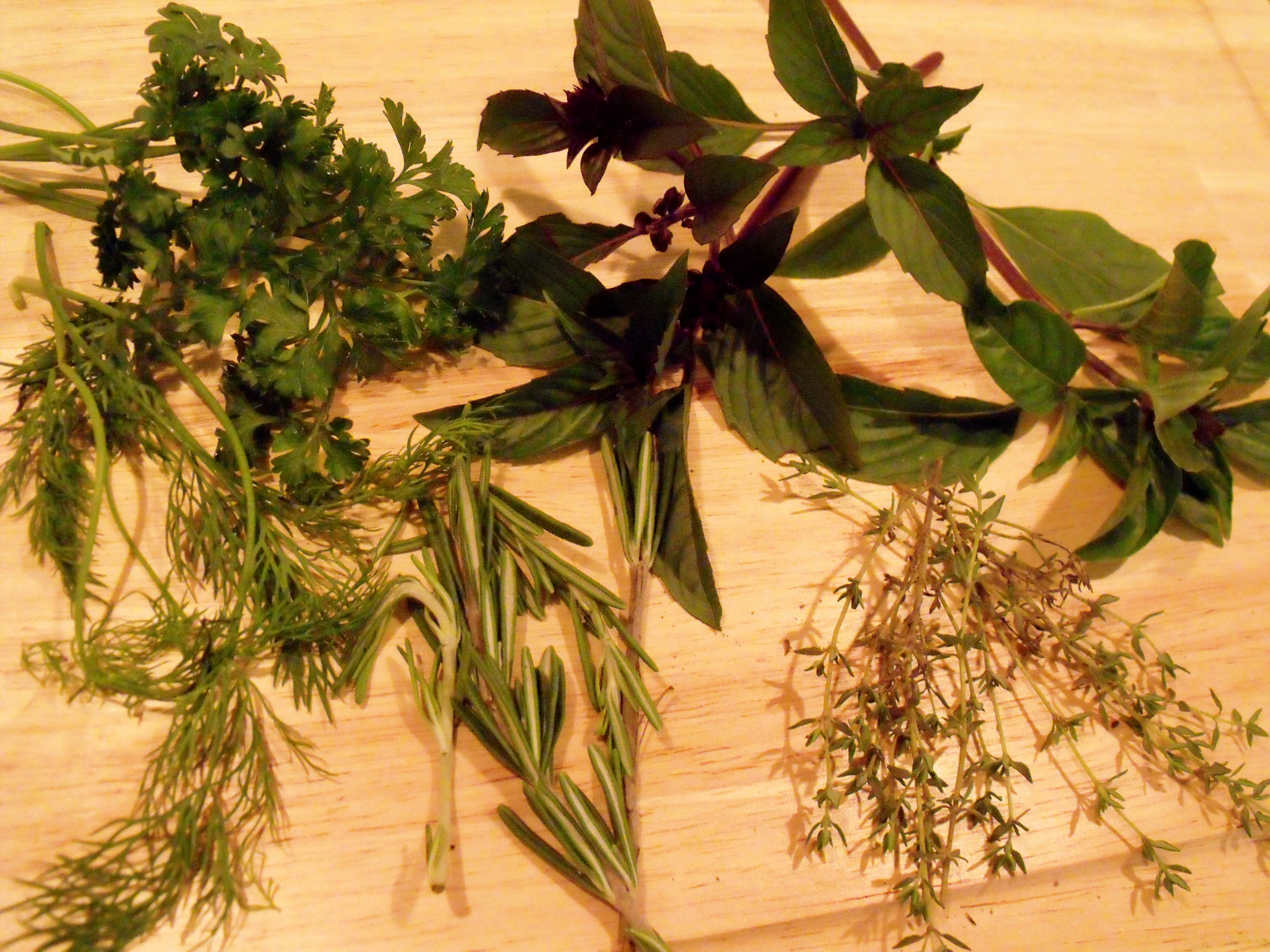 Cooking with Herbs! Cindys Recipes and Writings
