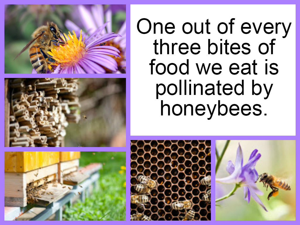beebold honybee collage bee friendly